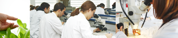 Bachelor's Degree in Biotechnology