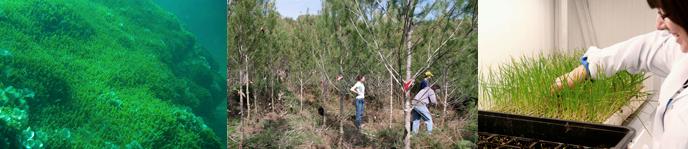 Doble grado en Ingeniería Forestal y del Medio Natural + Ciencias Ambientales