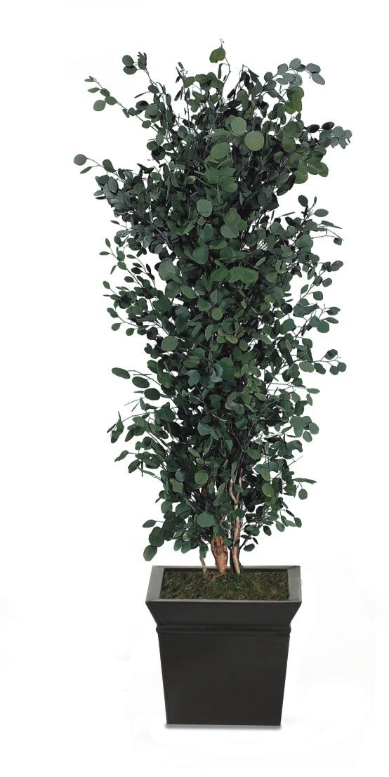 plantas naturales liofilizadas florister a cedat upv