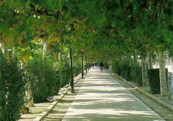 Castellon parques jardines y avenidas for Ideas para parques y jardines