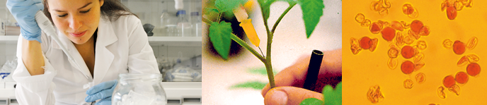 Master's Degree in Plant Genetics and Breeding